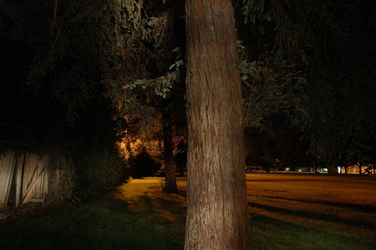 Night Park Redwood